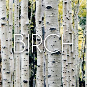 Birch Everest Collection