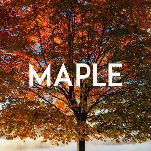 Maple Everest Collection